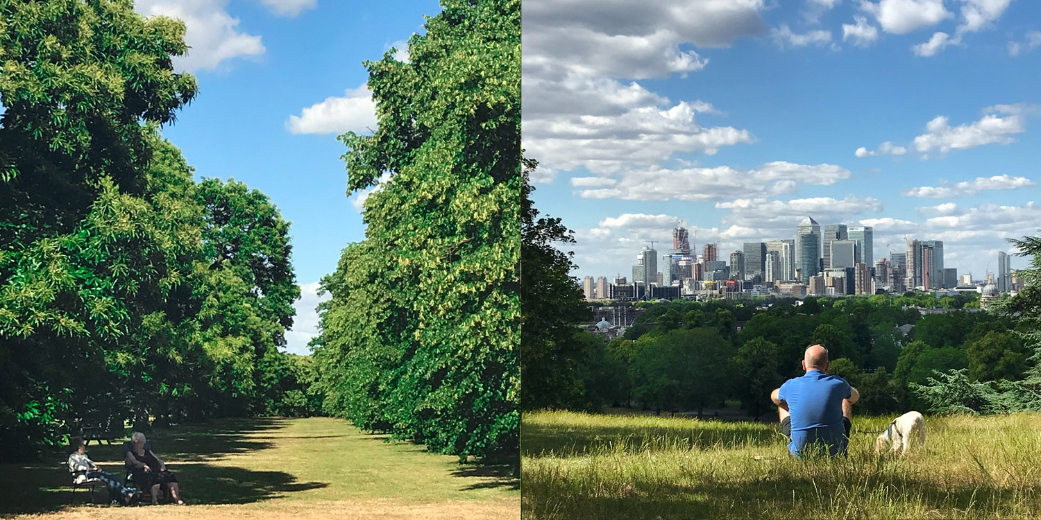Trees and views of the city